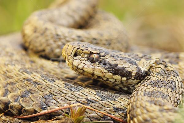 Nadir çayır portre hayvan Stok fotoğraf © taviphoto