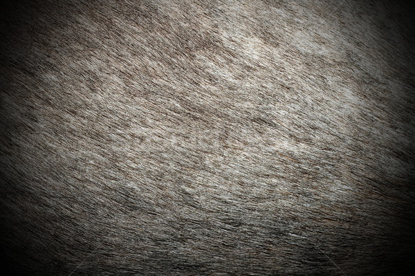 red deer real pelt pattern Stock photo © taviphoto