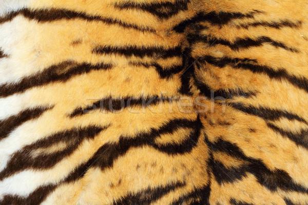 real tiger textured fur Stock photo © taviphoto