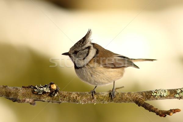 売り言葉 小 小枝 ツリー 森林 羽毛 ストックフォト © taviphoto