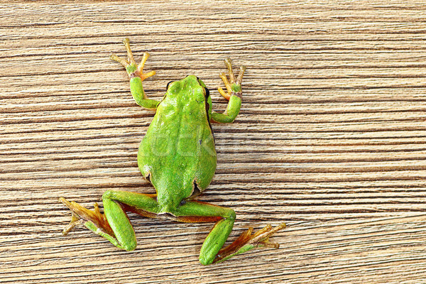 green tree frog climbing on wooden plank Stock photo © taviphoto