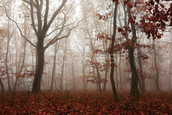 colorful forest in autumn season Stock photo © taviphoto