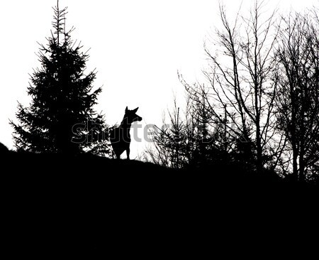 red deer stag in spring Stock photo © taviphoto