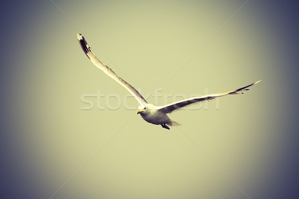 Repülés kamera klasszikus néz égbolt madár Stock fotó © taviphoto