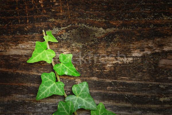 Belle lierre bois clôture naturelles texture Photo stock © taviphoto