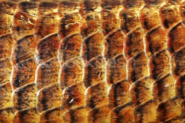 detail of Pseudopus apodus scales Stock photo © taviphoto