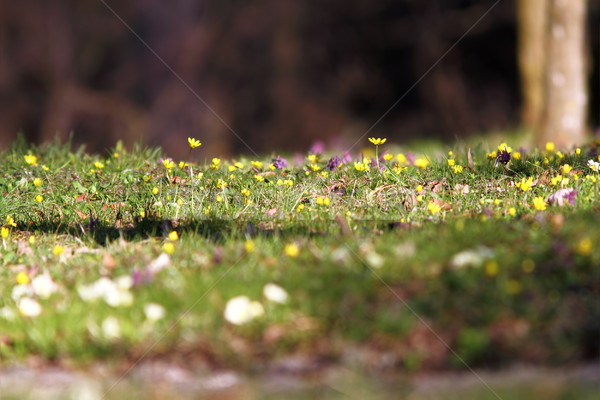 beautiful natural meadow in spring Stock photo © taviphoto