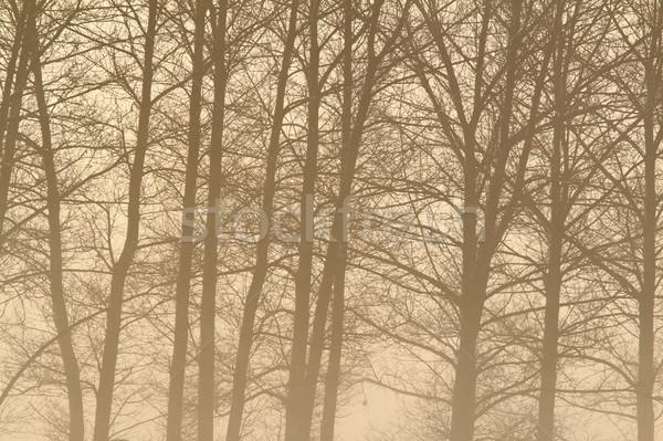érdekes ködös erdő részlet fa ágak Stock fotó © taviphoto