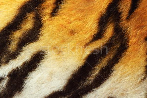 detail of tiger fur Stock photo © taviphoto