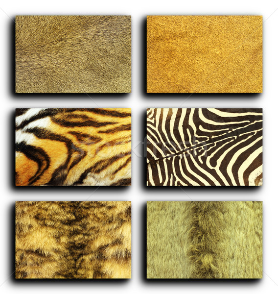 collection of wild animals fur Stock photo © taviphoto
