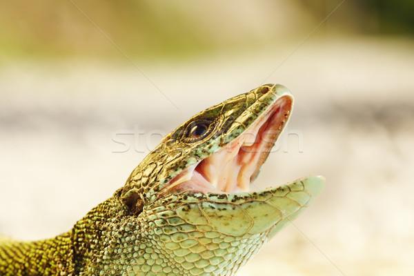 Portret agresywny gotowy gryźć mężczyzna zielone Zdjęcia stock © taviphoto