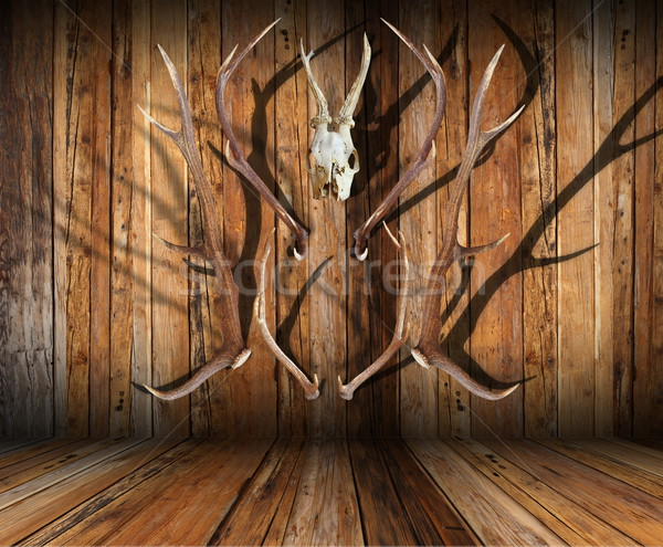 hunting trophies on wood Stock photo © taviphoto