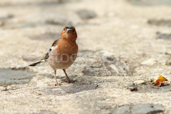 Mannelijke park steegje huis stad vogel Stockfoto © taviphoto
