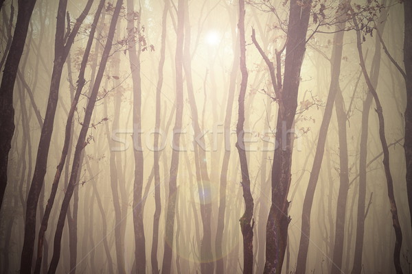 magic misty forest view Stock photo © taviphoto
