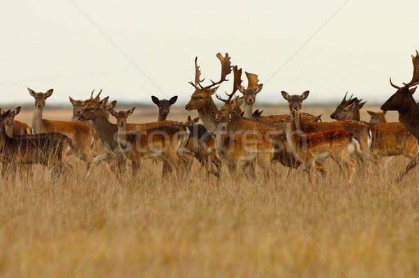Nagy nyáj család fű természet csoport Stock fotó © taviphoto
