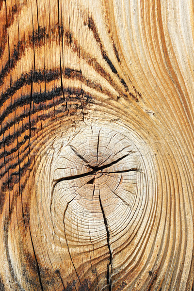 detail of spruce wood texture Stock photo © taviphoto