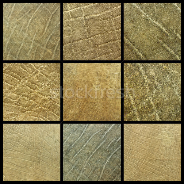 collection of african elephant leather Stock photo © taviphoto