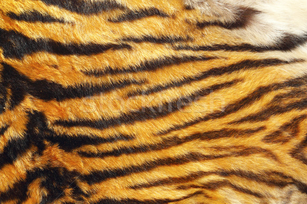 texture of wild tiger leather Stock photo © taviphoto