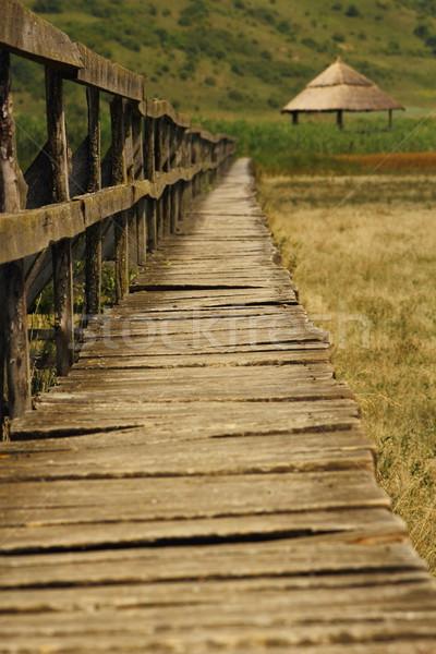 bridge towards the swamp Stock photo © taviphoto