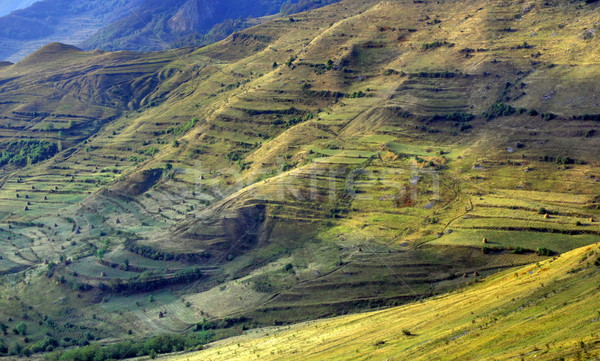 Organizacja ziemi w. Rumunia rolnictwa wiosną Zdjęcia stock © taviphoto