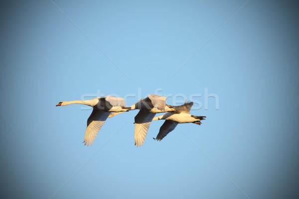 Dempen vlucht blauwe hemel natuur Blauw kleur Stockfoto © taviphoto
