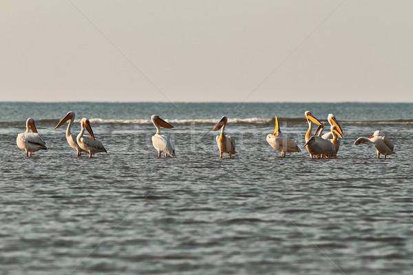 мелкий воды изображение Дунай Сток-фото © taviphoto