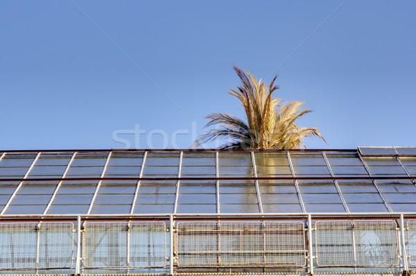 palm tree escaping  Stock photo © taviphoto