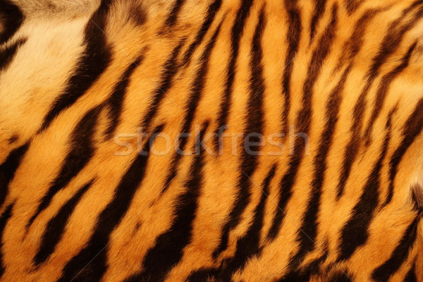 textured tiger fur Stock photo © taviphoto