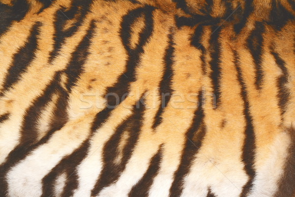 beautiful tiger fur with vintage effect Stock photo © taviphoto