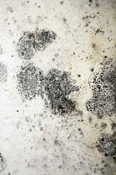 detail of mold on plaster Stock photo © taviphoto