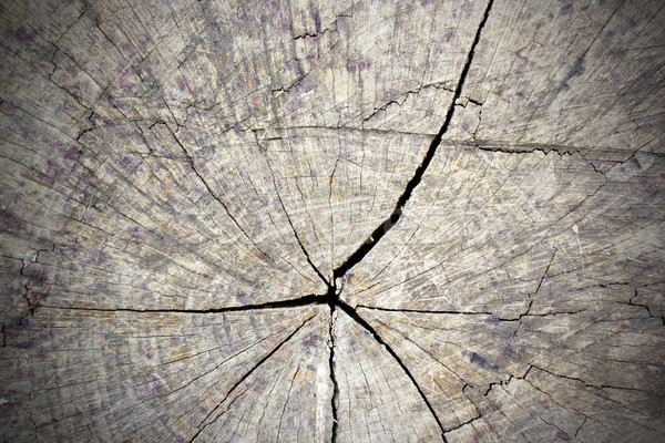 cracked section of tree trunk Stock photo © taviphoto