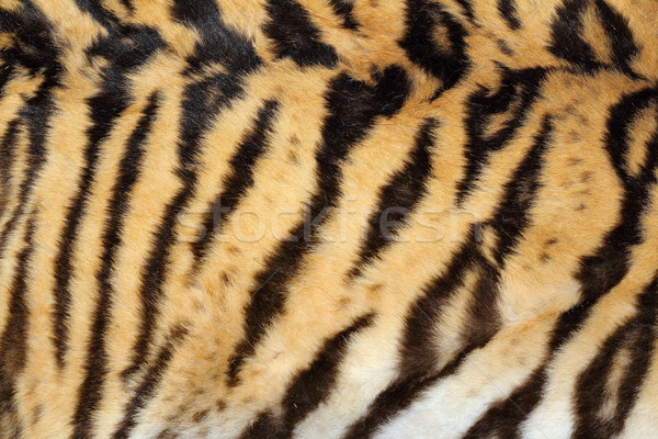 beauty of real tiger fur Stock photo © taviphoto