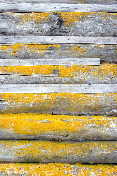 yellow moss on spruce planks Stock photo © taviphoto