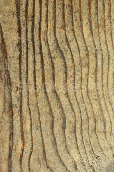 texture of fir plank Stock photo © taviphoto