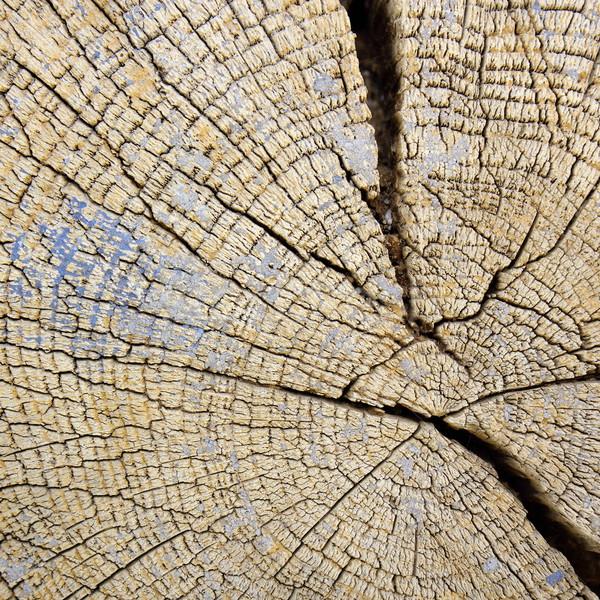 Vieux chêne poutre vue Photo stock © taviphoto