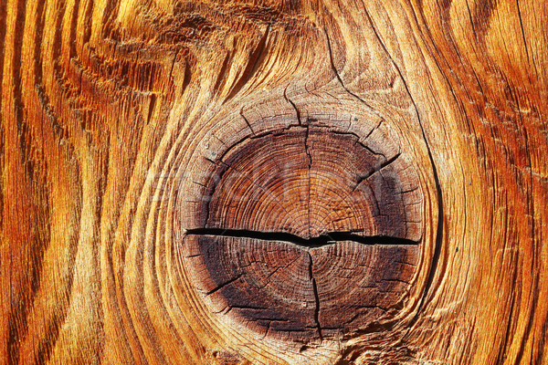 detail of beautiful knot on spruce wood plank Stock photo © taviphoto