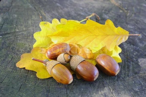 żółty dąb żywności lasu owoców Zdjęcia stock © taviphoto