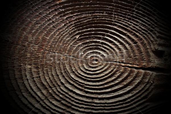 Lucfenyő fa gyűrűk vág részleg nyaláb Stock fotó © taviphoto