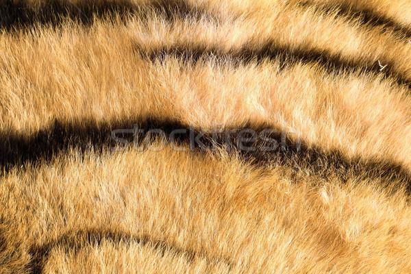 Сток-фото: тигр · детали · темно · фон
