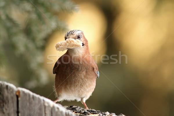 Pane becco alimentare foresta natura Foto d'archivio © taviphoto