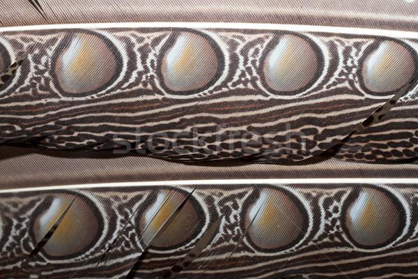 Borneo tüyler muhteşem soyut dizayn Stok fotoğraf © taviphoto