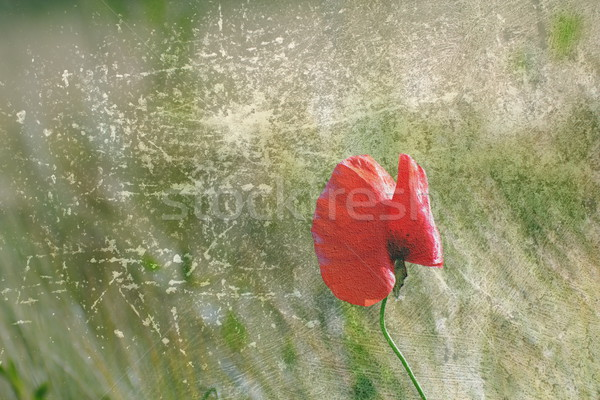 abstract distressed red poppy flower Stock photo © taviphoto
