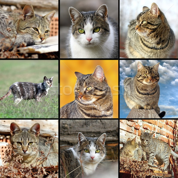 collection of images with domestic cats Stock photo © taviphoto