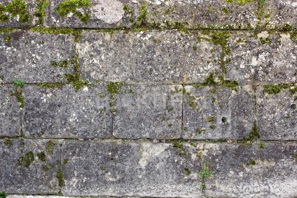 Yeşil yosun eski duvar dış ortaçağ Stok fotoğraf © taviphoto