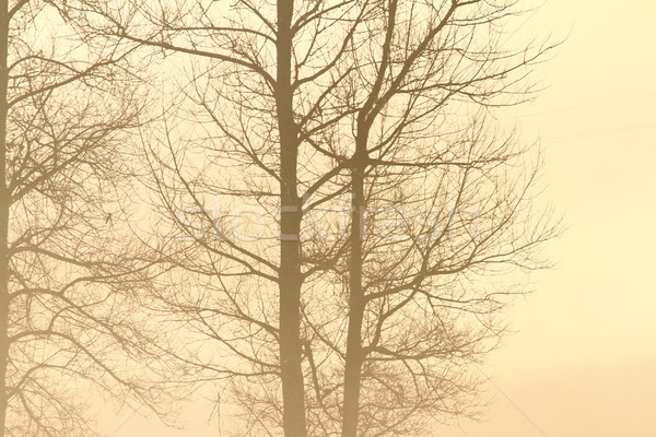 Stockfoto: Bomen · mist · mistig · winter · dag