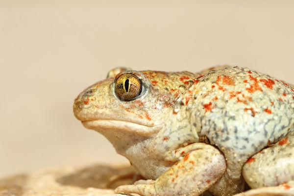 Színes fokhagyma varangy közelkép részletes makró Stock fotó © taviphoto