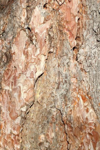 Pine schors detail oude bos Stockfoto © taviphoto