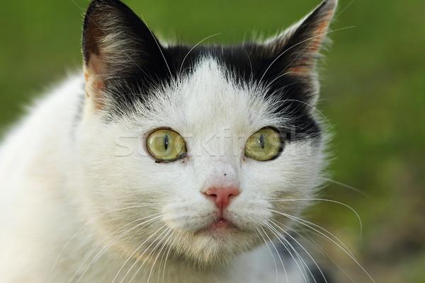 Cute curioso gato doméstico retrato jardín Foto stock © taviphoto