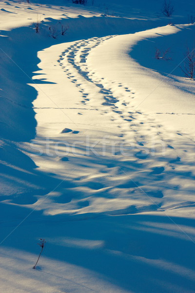 wildlife traces on rural road Stock photo © taviphoto
