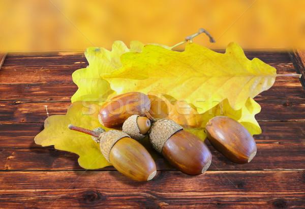 Automne or chêne belle arbre fruits Photo stock © taviphoto
